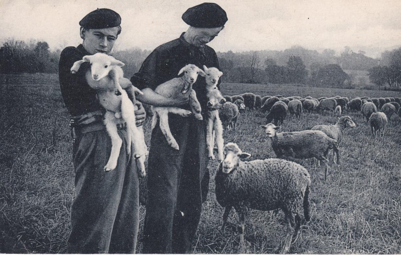 Les compagnons de France aux champs : Compagnons avec des moutons