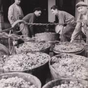 Les vendanges dans l'Hérault, juillet 1941